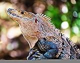 Lacvik DIY Jigsaw Puzzle Green America Black Ctenosaur Costa Rica Animal Central Rompecabezas de Madera para Adultos 3000 Piezas, los Mejores Juegos Familiares de descompresión para niños 122x81cm