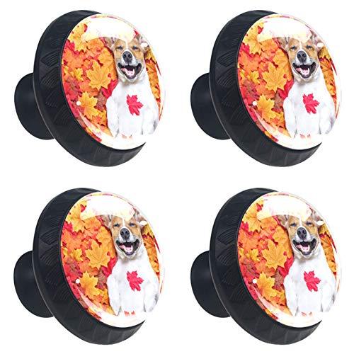 KAMEARI Happy Dog Lie On Maple Leaves - Tirador para cajón (4 unidades, cristal, forma de círculo, con tornillos, para casa, cocina, oficina