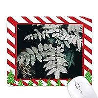 写真の葉の植物の性質 ゴムクリスマスキャンディマウスパッド