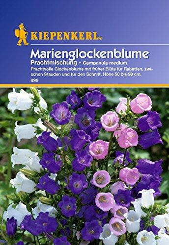 Sperli Blumensamen Glockenblume Marien-Prachtmischung, grün