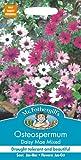 Mr Fothergill's 13177 Flower Seeds, OSTEOSPERMUM Daisy Mae Mixed