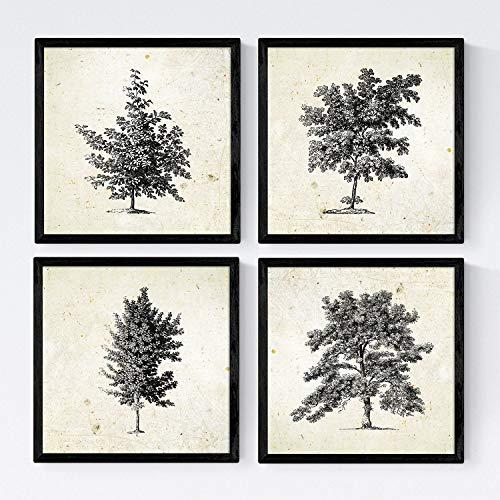 Nacnic Set de Cuatro láminas de arboles. Arboles sin Flores en tamaño 20x20 cm, Fondo Papel Antiguo Vintage Poster Papel 250 gr y tintas Marco