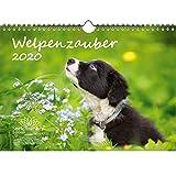 Welpenzauber DIN A4 Kalender 2020 Hunde Welpen - Seelenzauber