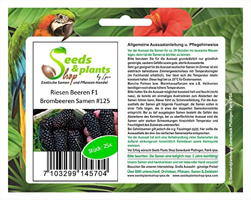 Stk - 25x Riesen F1 Brombeeren Obst Pflanzen - Samen #125 - Seeds Plants Shop Samenbank Pfullingen Patrik Ipsa