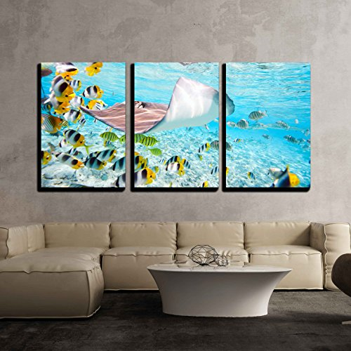 "wall26 - 3 Piece Canvas Wall Art - Colorful Fish, Stingray and Black Tipped Sharks Underwater in Bora Bora Lagoon - Modern Home Decor Stretched and Framed Ready to Hang - 16""x24""x3 Panels"