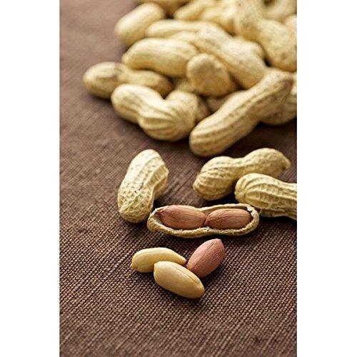 Erdnuss Samen - Echte Erdnuss hypogea