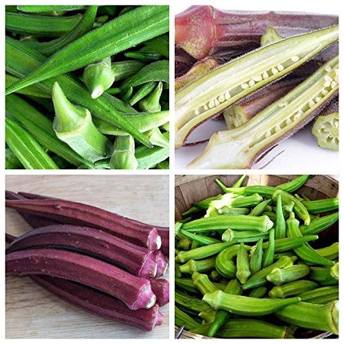Okra, Lady's fingers - set of seeds of 2 vegetable plants varieties