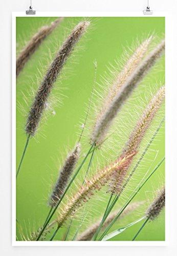 Sinus Art Kunst und Deko Poster - Naturfotografie – Schilfrohr im Grünen- Fotodruck in gestochen scharfer Qualität
