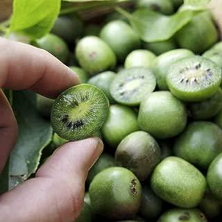 Actinidia arguta Hardy kiwi Mini Cocktail Kiwi Vine 50+ seeds
