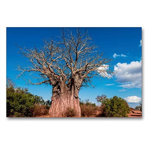 Premium - Lienzo de lienzo (90 cm x 60 cm, horizontal, gigante Baobab, el árbol del mono más sur de África, Kruger National Park, cuadro sobre lienzo, diseño de CALVENDO Orte