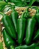 Las semillas de pimiento jalapeño, Tam jalapeño Semillas, de la herencia de la pimienta caliente de la semilla, no GMO 50ct