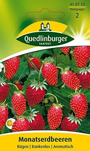 Erdbeeren Monatserdbeeren Rügen Fragaria