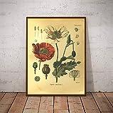 Vintage Botanik Drucke Mohn & Samt Pflanze Poster Wandkunst