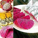 100 Unids Semillas De Pitaya De Color Mezclado Fruta Deliciosa Planta Bonsai Decoración De Jardín En Casa Semillas De Plantas De Jardín Semillas de Pitaya
