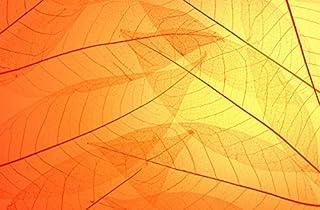 3D Yellow Leaf Texture 070 Wall Paper Print Decal Deco Indoor Wall Mural Self-adhesive Wallpaper AJ WALLPAPER AU Zoe (416x...