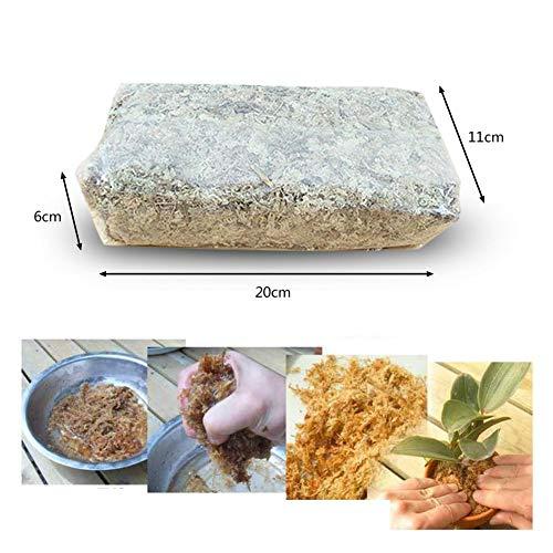 Sphagnum Moos Substrat getrocknet, Wassermoos Trockenmoos Wasser Gras Substrate für Orchidee Phalaenopsis 6L, ideal für Reptilien, Einstreu und Terrarium