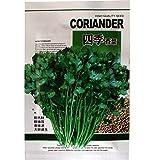 SUCHUANGUANG Semillas de Cilantro orgánico Non-GMO Leisure Coriander Heirloom 80% Tasa de germinación Semillas de Cilantro