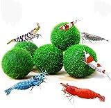 YDZXB 5 Pcs Moss Balls, Mini Purificación de Agua Algas Decortive Planta Acuática, para Acuario Pecera Frasco de Vidrio (3.5cm)