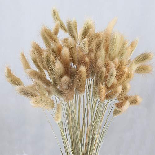 HUAESIN 100pcs Getrocknete Pampasgras Natürliche Trockenblumen Blumenstrauß Getrocknete Blumen Pampasgras Deko für Hause Hochzeit Party Hotel Vase Terrarium Bodenvase Hell Braun