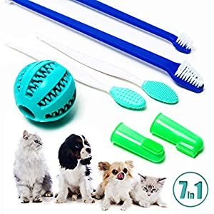 Best toothbrush for small dogs
