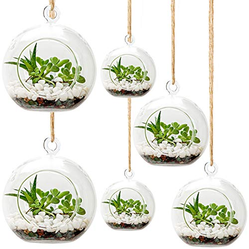 6 Pack Hanging Glass Terrarium, Glass Air Plants Holders with Ropes, Hanging Glass Tealight Candles, Plant Terrarium Globes for Bar Garden Wedding Party Decoration (Plants Not Included)