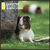 Hamsters Calendar 2022: 18 Month Calendar Hamsters, Square Calendar 2022, Cute Gift Idea For Hamsters Lovers Women & Men, Size 8.5 x 8.5 Inch Monthly
