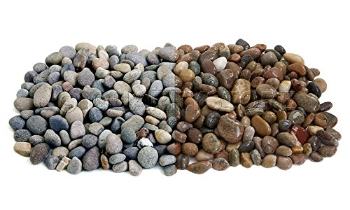 Quarrystore Assorted Scottish Beach Pebbles from 14mm to 20mm in Size - Ideal Outside Decorative Stones for Gardens and Craft Projects - 1kg Bag