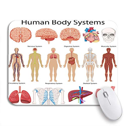 Gaming mouse pad diagrama circulatorio que muestra los siste