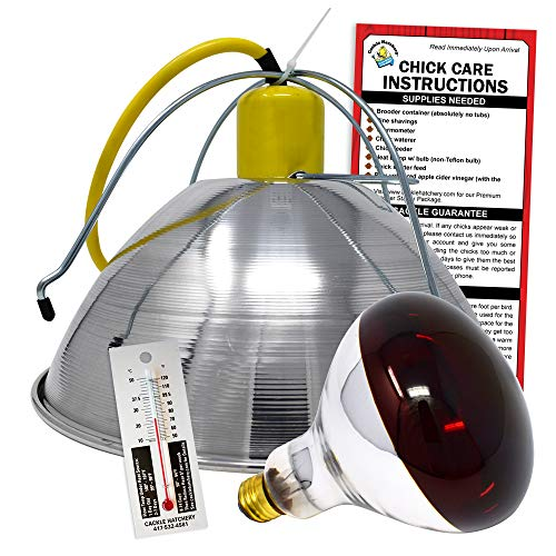 Chick Brooder Lamp and Bulb Combo