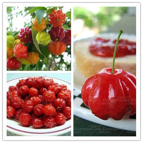 20pcs Graines, cerise Surinam Pitanga fruits Graines, cerise {rouge} brésilienne, des plantes rares Maison et Jardin