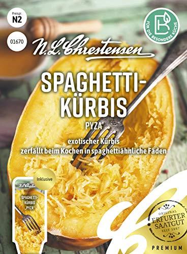 Spaghettikürbis Pyza, exotischer Kürbis, Samen