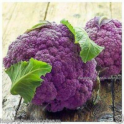VEGETABLE - Purple Cauliflower - DI SICILIA VIOLETTO - 50 SEEDS - Brassic