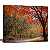 DIY Digital Oil Painting Set Fall Foliage in South Korea Vermont Fall Stock Pictures Royalty Free Paint by Numbers Kits for Adult Beginner Children Wooden Frame Art Craft for Home Wall Decor-16x20'