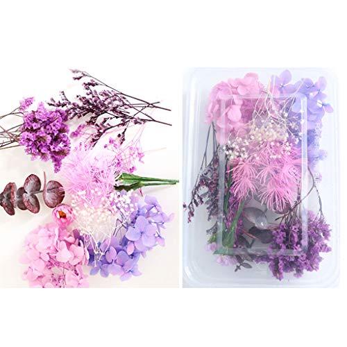 Sichuan 1 Box Real Mix getrocknete Blumen für Harzschmuck Trockenpflanzen gepresste Blume