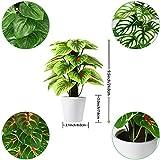 Immagine 2 soguyi piante artificiali 24 cm