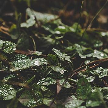 Alpines Rain