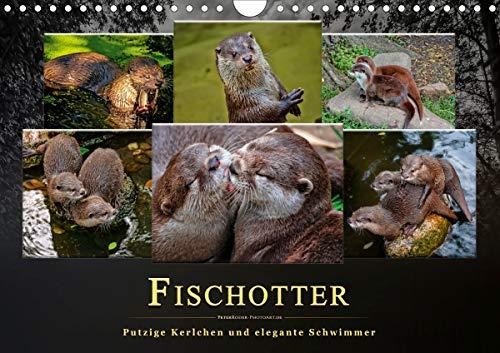 Fischotter - putzige Kerlchen und elegante Schwimmer (Wandkalender 2021 DIN A4 quer)