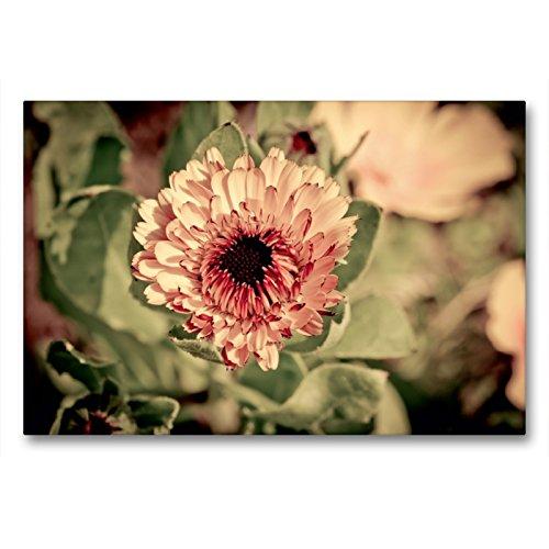 Premium Textil-Leinwand 90 x 60 cm Quer-Format Habichtskraut auf Blumenwiese | Wandbild, HD-Bild auf Keilrahmen, Fertigbild auf hochwertigem Vlies, Leinwanddruck von Marianne Drews