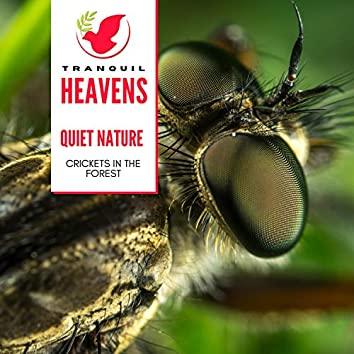 Quiet Nature - Crickets in the Forest