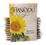 Thank You - Mammoth Sunflower Seed Packet Party Favors - Already Filled - Pack of 20