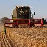 BIO Weizen 5kg – direkt vom Bauernhof – aus kontrolliert biologischem Anbau - 5