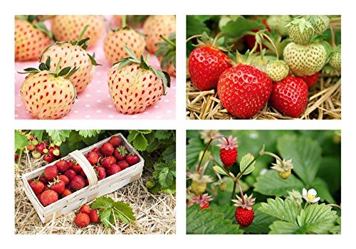 Wunderbares Erdbeer-Sortiment 10 Töpfe