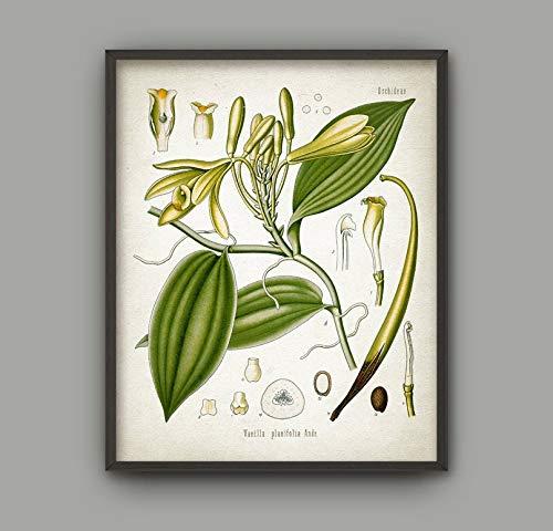 Rac76yd Vanilla Kitchen Wall Art Póster de la planta de vainilla con impresión de vainilla antiguo con ilustración de especias de cocina