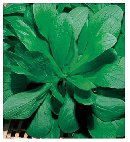 50 c.valerian zaden - valerianella locusta in originele verpakking gemaakt in italië - groente delicatesse - valeriaan
