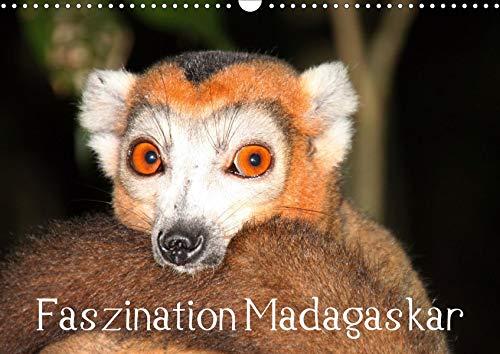 Faszination Madagaskar (Wandkalender 2020 DIN A3 quer): Ein Streifzug durch die Wunderwelt Madagaskars. (Monatskalender, 14 Seiten ) (CALVENDO Orte)