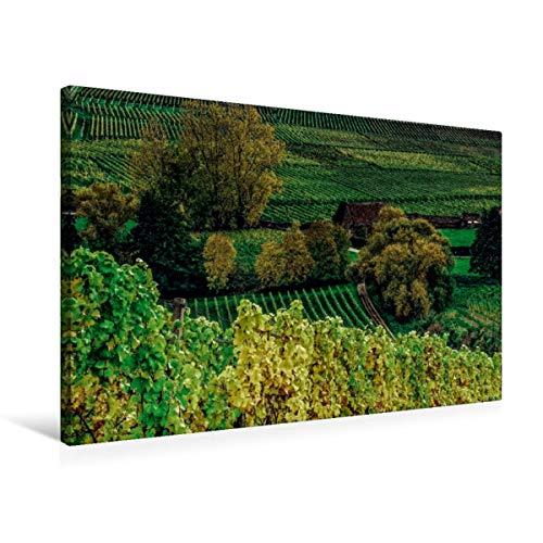 Calvendo Premium Textil-Leinwand 75 cm x 50 cm Quer, Schloss Johannisberger Weinlage | Wandbild, Bild auf Keilrahmen, Fertigbild auf Echter Leinwand, Leinwanddruck: Rheingau Riesling Natur Natur
