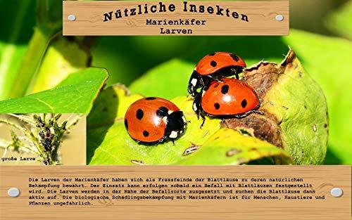 Vgo... 20 Marienkäfer Larven gegen Blattläuse