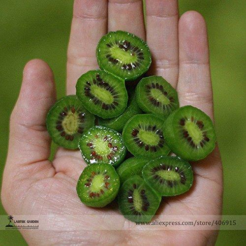 Mini Kiwi WINTERHARDY HEIRLOOM VARIETY! seeds 20