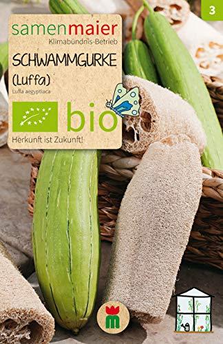 BIO Schwammgurke (Luffa aegyptiaca)