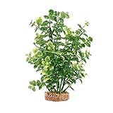 Fluval Fluval Plant Bacopa Verde,20cm 200 g